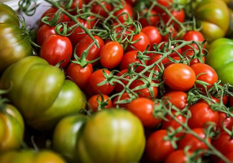Fruit Logistica, Organic Route