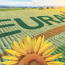 Euralis presenta su gama de semillas «Girasol Todoterreno»