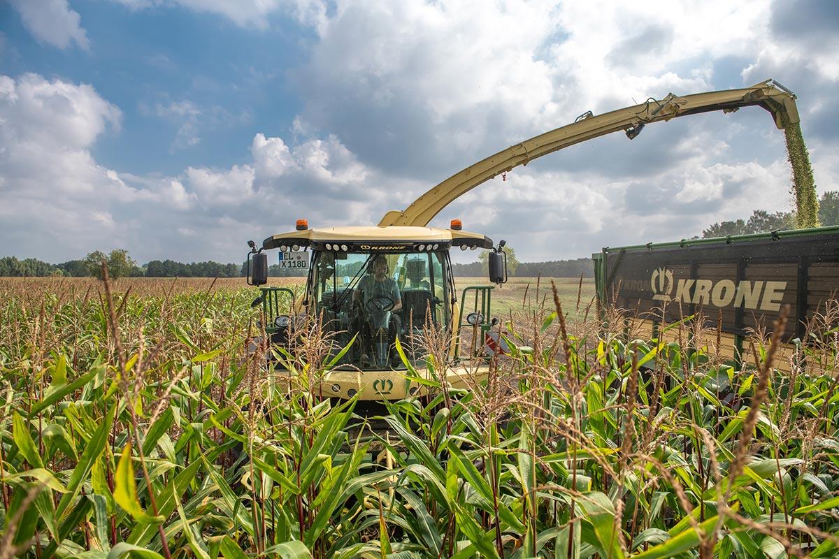 Farming Agrícola