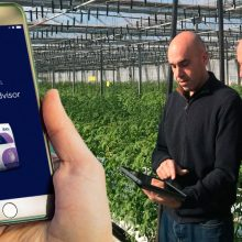 PeKacid, la nueva App de ICL de ayuda al agricultor