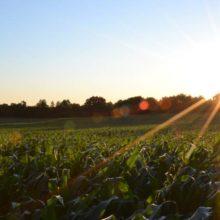 Los gases de efecto invernadero en la atmósfera siguen aumentando