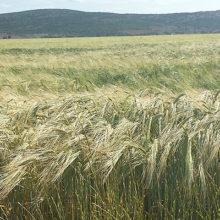 Rebaja de IRPF para afectados por DANA, sequía y problemas de mercado