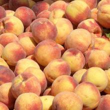 Se inicia la cosecha de fruta de hueso sin precios ni contratos en el campo