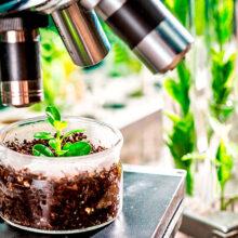 Timac Agro apuesta por el biocontrol