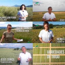 Visitas virtuales a los ensayos de cultivos extensivos de INTIA