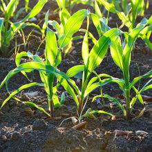 Fertinagro Biotech patenta una tecnología para ayudar a fijar nitrógeno