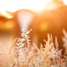 El sector agrario reduce un 1,6% los gases de efecto invernadero
