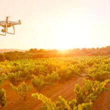 Atos lleva la IA a Ribera del Duero con imágenes de drones y satélites