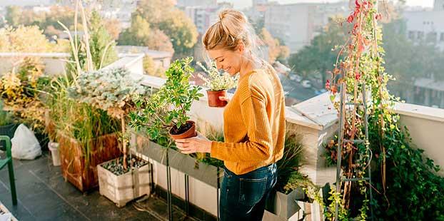 Cítricos en la jardinería, fragancia y vitamina C en el jardín y balcón