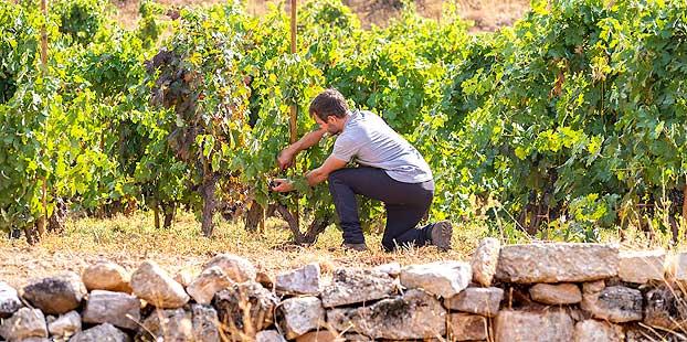 LowpHWine, proyecto para estudiar la pérdida de acidez del vino