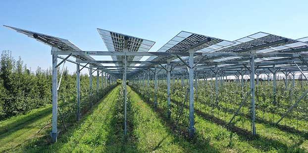BayWa r.e. y Fraunhofer ISE avanzan hacia el cultivo de frutas sin emisiones